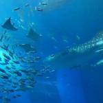 美ら海水族館に絡めたい絶景ドライブルート(古宇利島)
